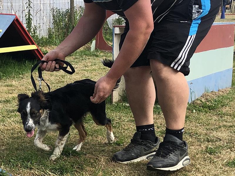 CENTRE CANIN DE ST GILLES Education Canine Rennes Cole Du Chiot 18 69
