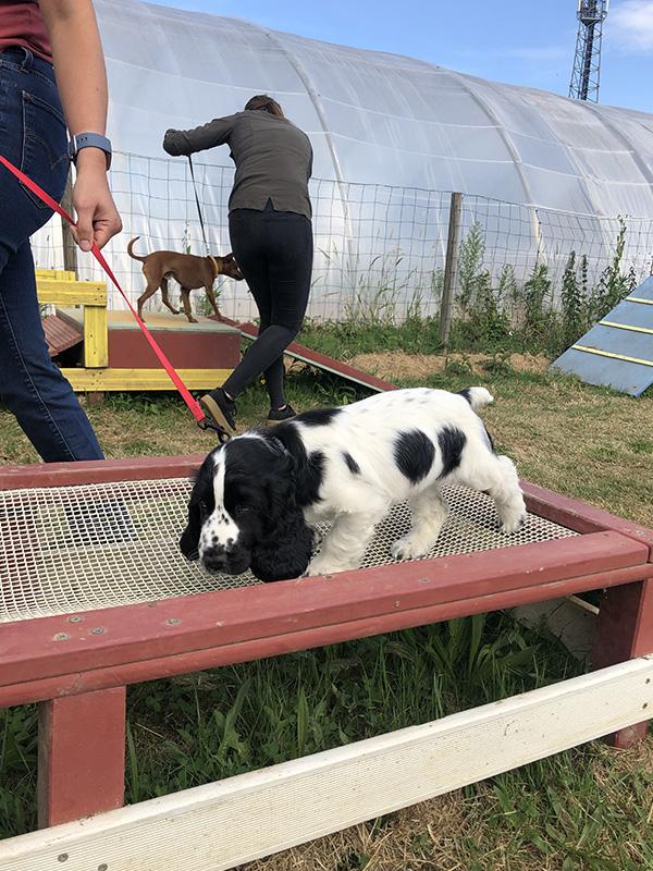 CENTRE CANIN DE ST GILLES Education Canine Rennes Cole Du Chiot1 52
