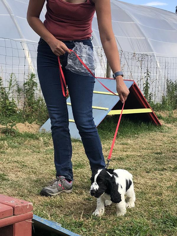 CENTRE CANIN DE ST GILLES Education Canine Rennes Cole Du Chiot2 53