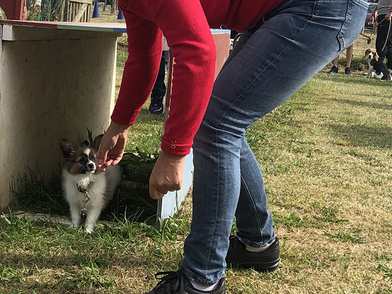 CENTRE CANIN DE ST GILLES Education Canine Rennes Cole Du Chiot27 78