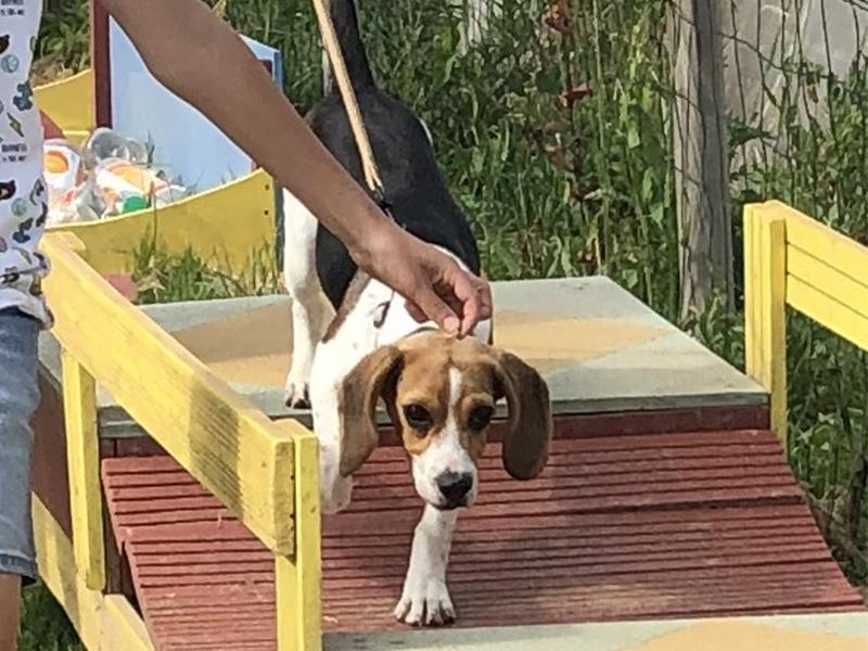 CENTRE CANIN DE ST GILLES Education Canine Rennes Cole Du Chiot29 80