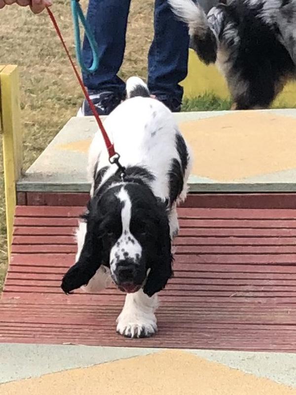 CENTRE CANIN DE ST GILLES Education Canine Rennes Cole Du Chiot31 82
