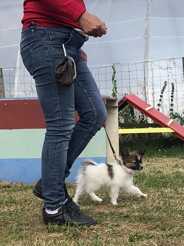 CENTRE CANIN DE ST GILLES Education Canine Rennes Cole Du Chiot6 57