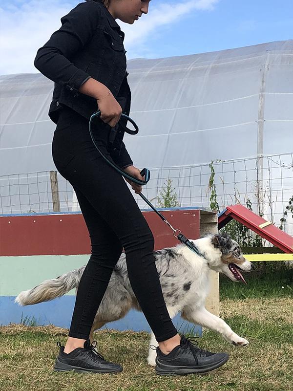 CENTRE CANIN DE ST GILLES Education Canine Rennes Cole Du Chiot8 59