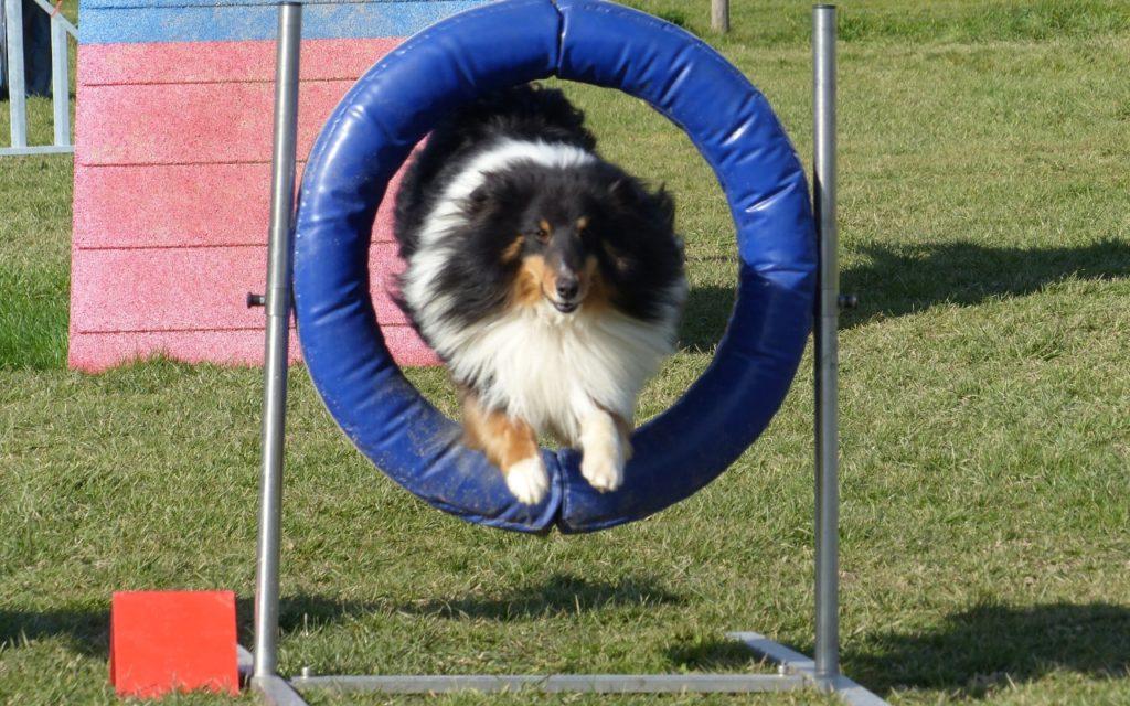 CENTRE CANIN DE ST GILLES Education Canine Rennes Agility – 10 119