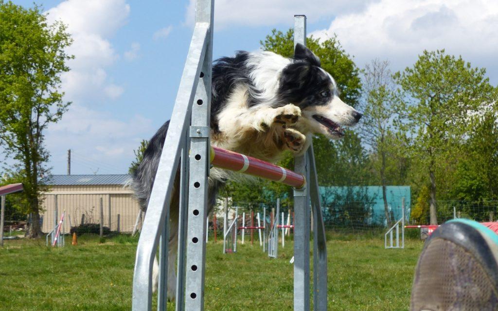CENTRE CANIN DE ST GILLES Education Canine Rennes Agility – 12 109