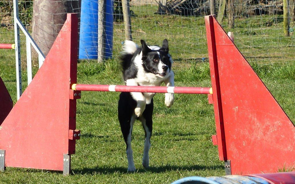 CENTRE CANIN DE ST GILLES Education Canine Rennes Agility – 2 111