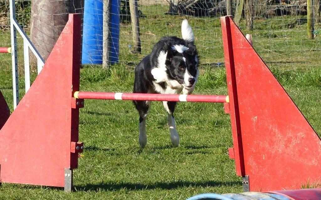 CENTRE CANIN DE ST GILLES Education Canine Rennes Agility – 3 112