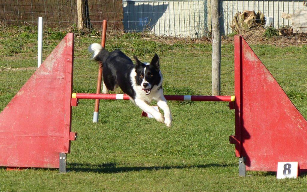 CENTRE CANIN DE ST GILLES Education Canine Rennes Agility – 5 114