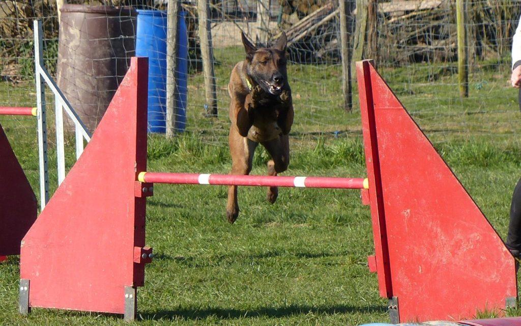 CENTRE CANIN DE ST GILLES Education Canine Rennes Agility – 6 115