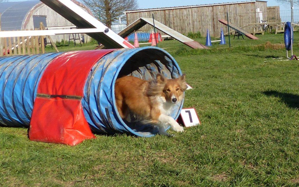 CENTRE CANIN DE ST GILLES Education Canine Rennes Agility – 7 116