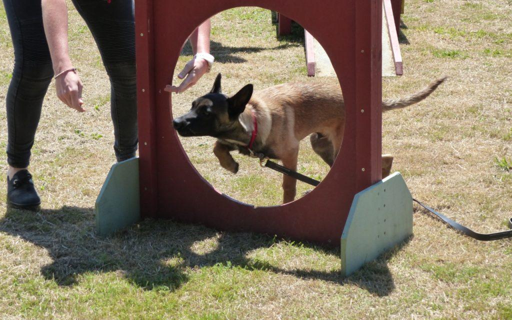CENTRE CANIN DE ST GILLES Education Canine Rennes Ecole Du Chiot – 1 120
