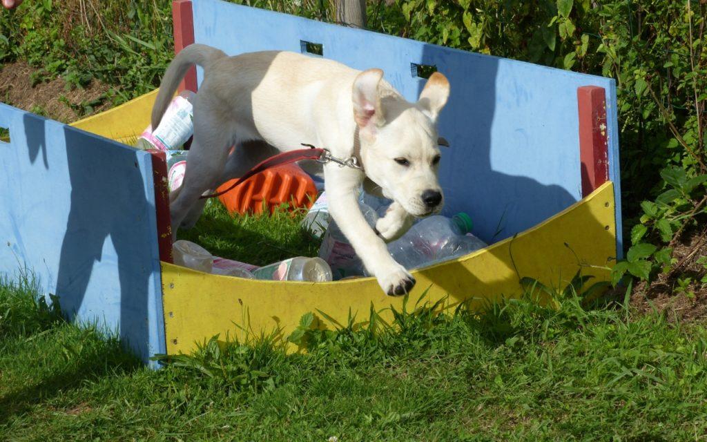 CENTRE CANIN DE ST GILLES Education Canine Rennes Ecole Du Chiot – 5 124