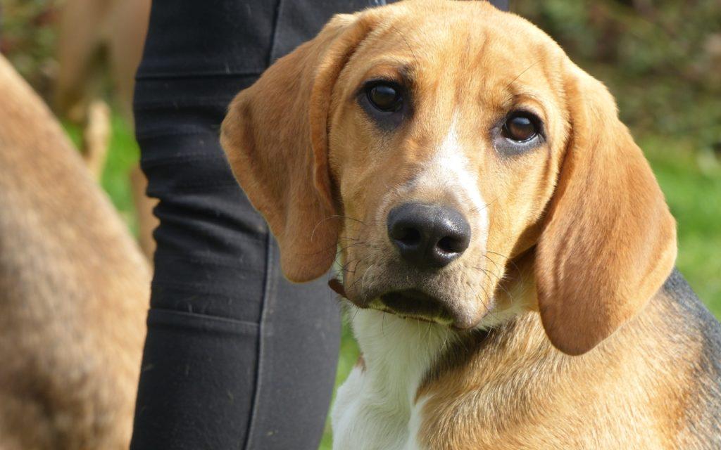 CENTRE CANIN DE ST GILLES Education Canine Rennes Education – 4 134
